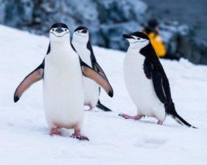 penguins quiz