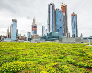 Green Roofs New York