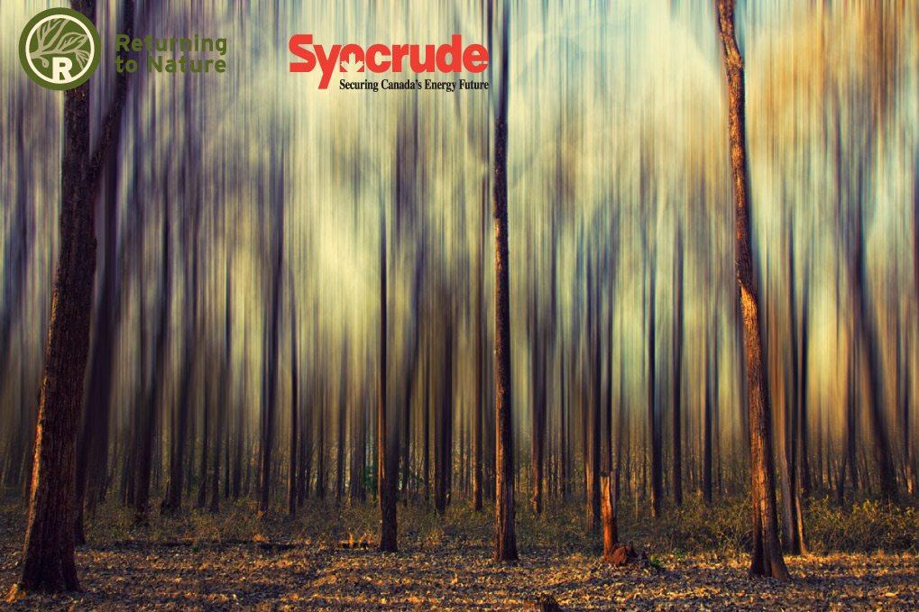 Syncrude-Tree.jpg