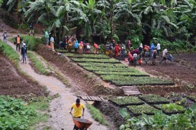 Katalyst Technologies planting trees in Tanzania