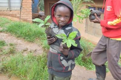 codeforce360 planting in tanzania