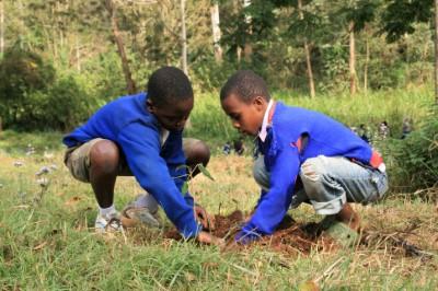 studio about tanzania trees