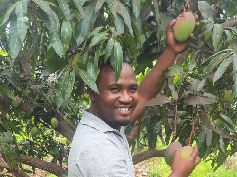 tanzania fruit harvest