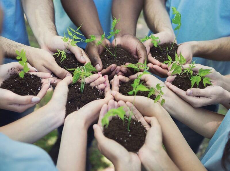 circle health group team trees