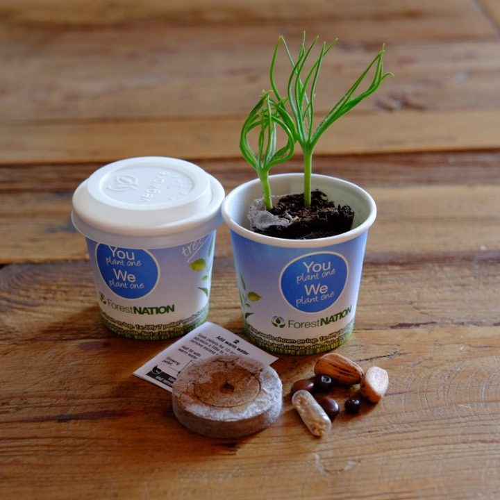 Tree Kit Cup 1