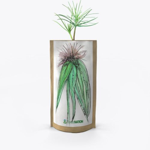 ForestNation-pouch-Ndene-5