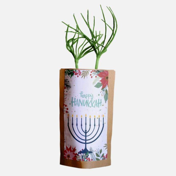 Happy Hanukkah Candles Growing Kit 2