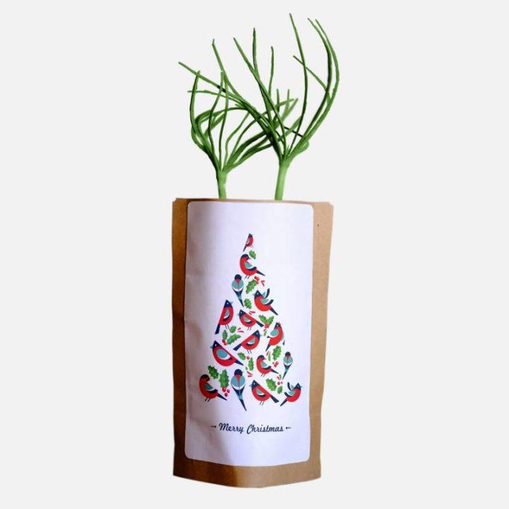 Merry Christmas Birdy Tree Growing Kit 2