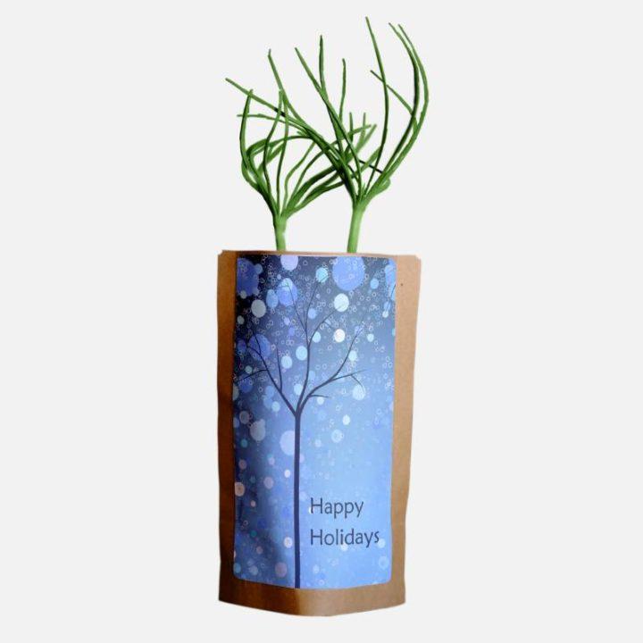 Season's Greetings Blue Forest Growing Kit 2