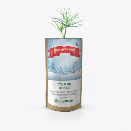 Merry Christmas Ribbon Growing Kit