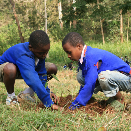 Tanzania Tree Planting ForestNation