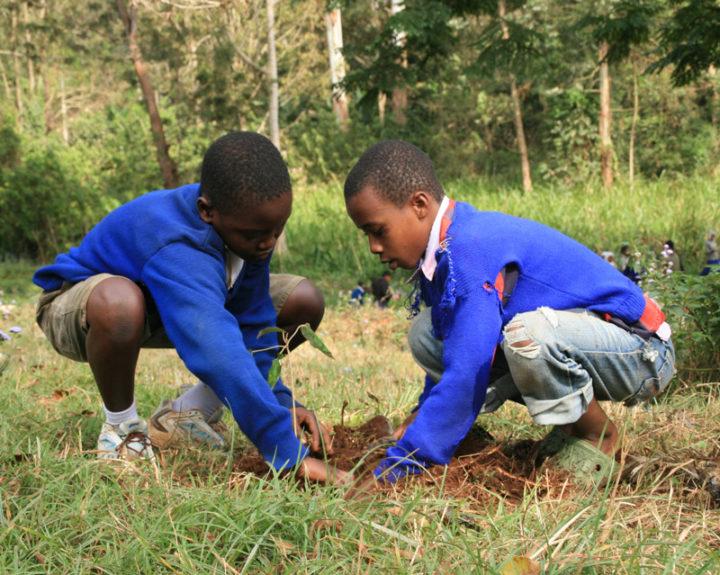 Tanzania Tree Planting ForestNation