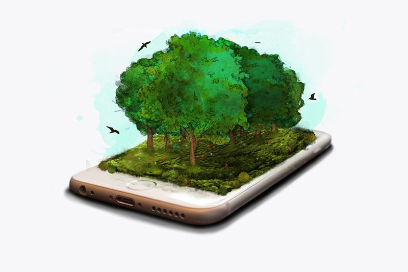 SEEDS-plant-Trees