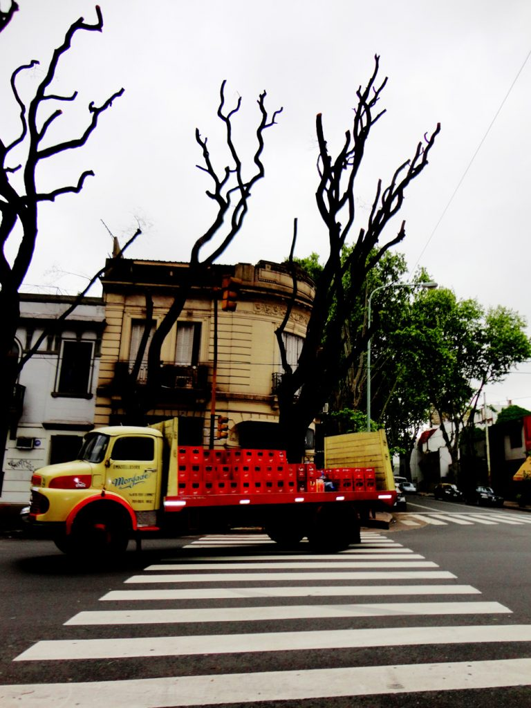 Buenos_Aires_Trees4