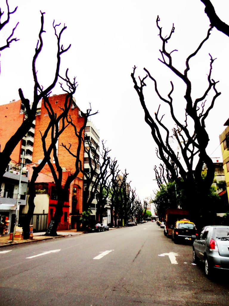 Buenos_Aires_Trees5