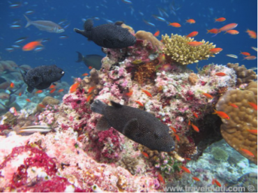 Coral Reefs Fascinating ecosystems lesson plan