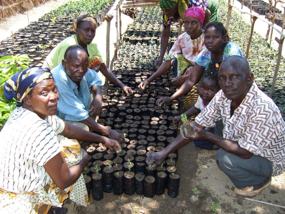 Malawi Tree planting