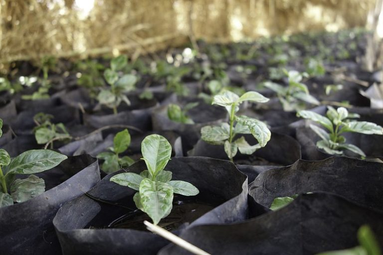 Tree planting projects
