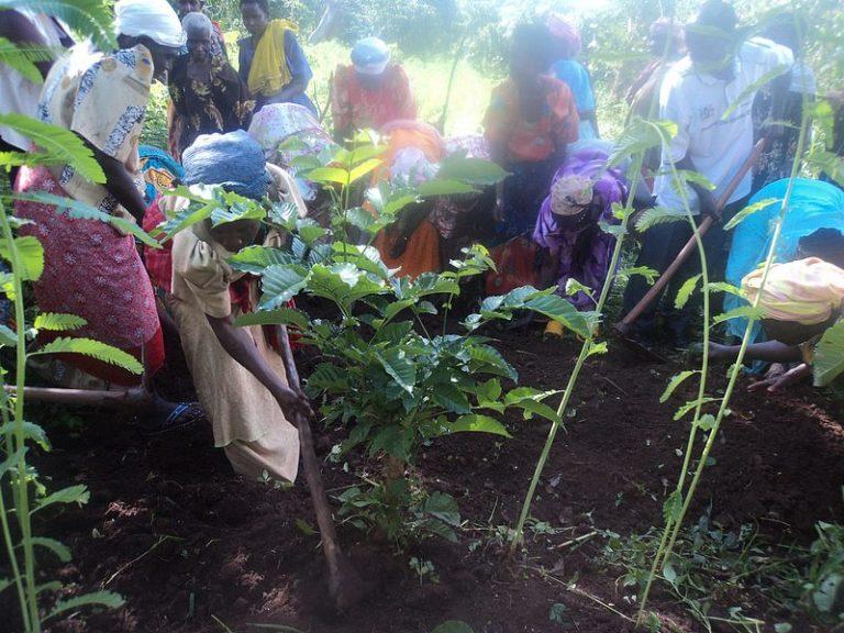 Uganda tree planting