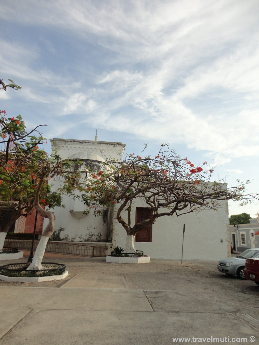 trees painted white in mexico