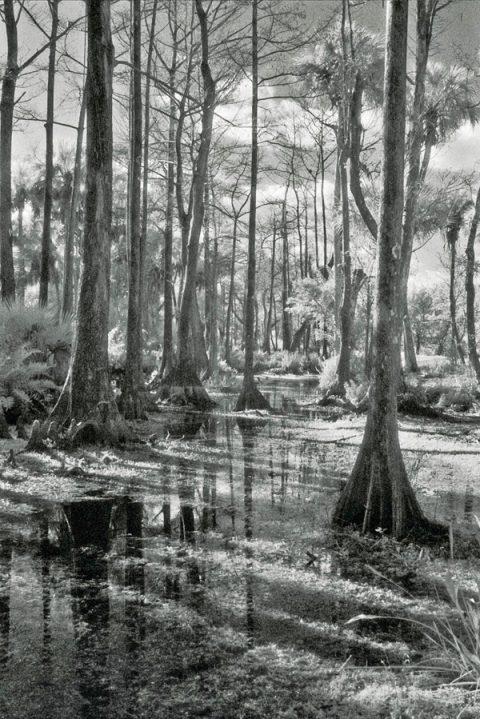 Kevin Boldenow ForestNation
