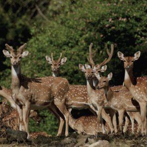 deers1wcc