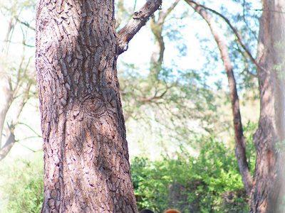 CASTLEBAY-LANE-CHARTER-SCHOOL-Tree-Kit-Fundraier