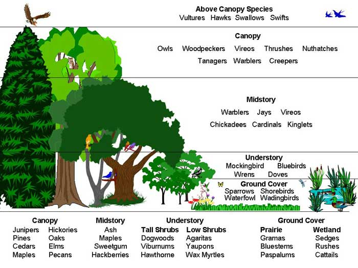 A Walk in the Woods - Ecology Lesson Plan - ForestNation