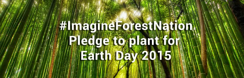 ImagineForestNation