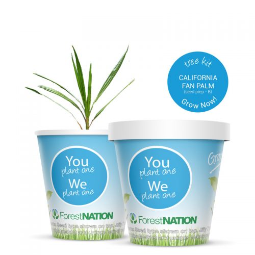 California Fan Palm Growing Kit