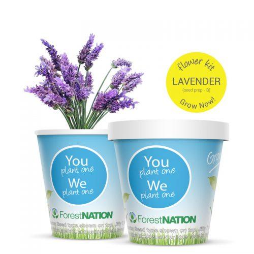 Lavender growing kit
