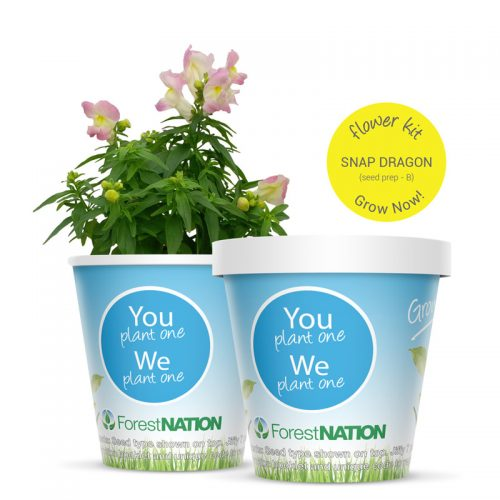 Snap Dragon Growing kit