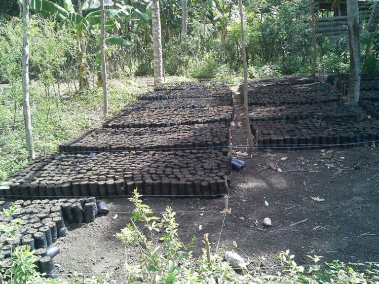 Haiti-Tree-Planting