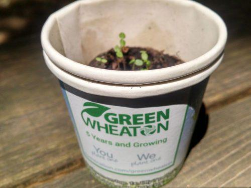 Tree-Kit-GreenWheaton-3