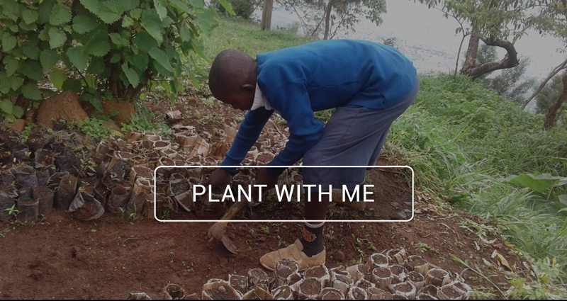 Tree-PLanting-Tanzania-Banner-plantweme