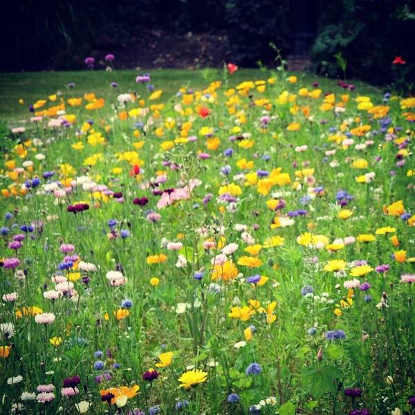 flowers-herbs-600