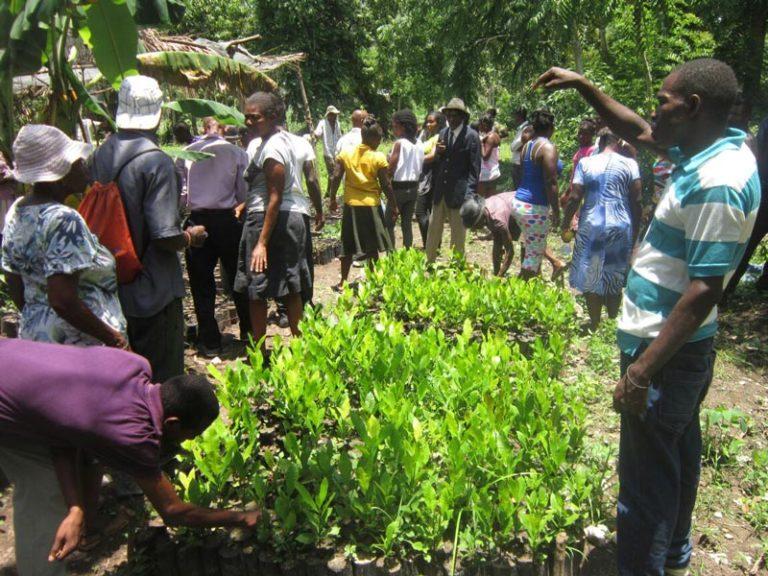 Tree Planting Haiti