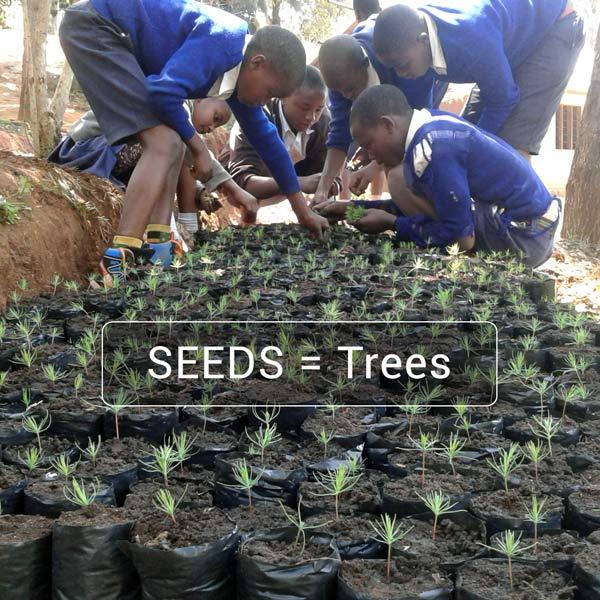 seeds=trees