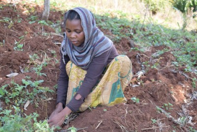 investec tanzania plantation