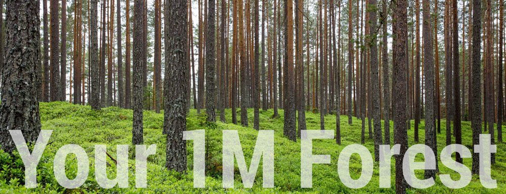 1 Million Tree Forest 1
