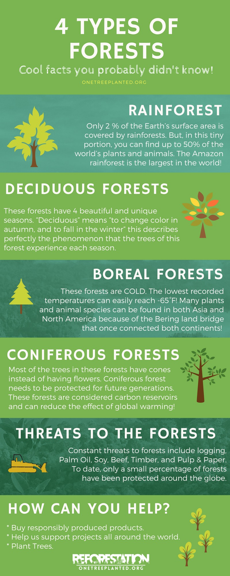 Types Of Wine Bottles Infographic: Pine Tree In Barcelona TransPerfect