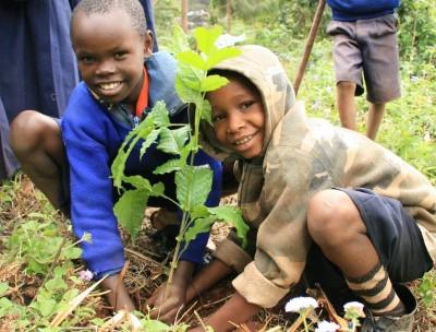 seager co reforesting tanzania