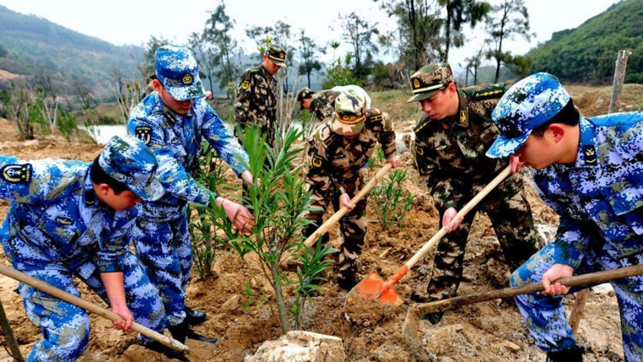 How World Governments are Reforesting our Future 2