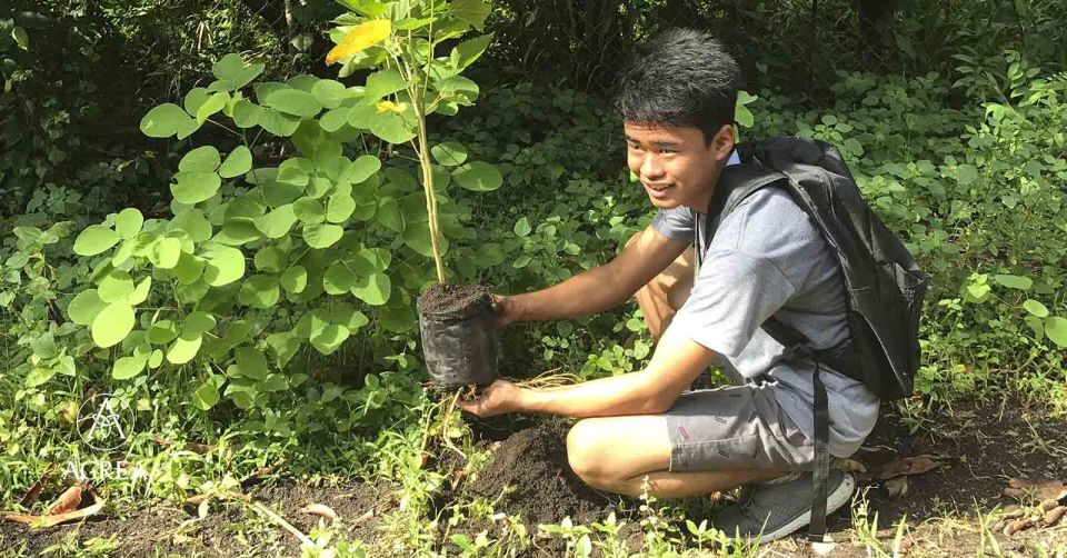 How World Governments are Reforesting our Future 4