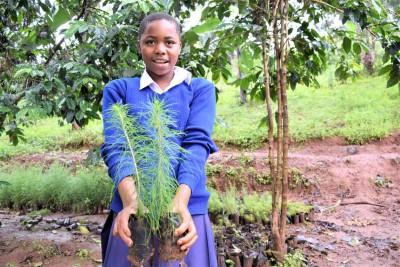 packsize reforesting tanzania