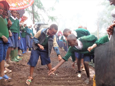 travel and tree reforesting tanzania
