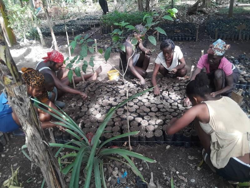 7000 bags of soil haiti mountains