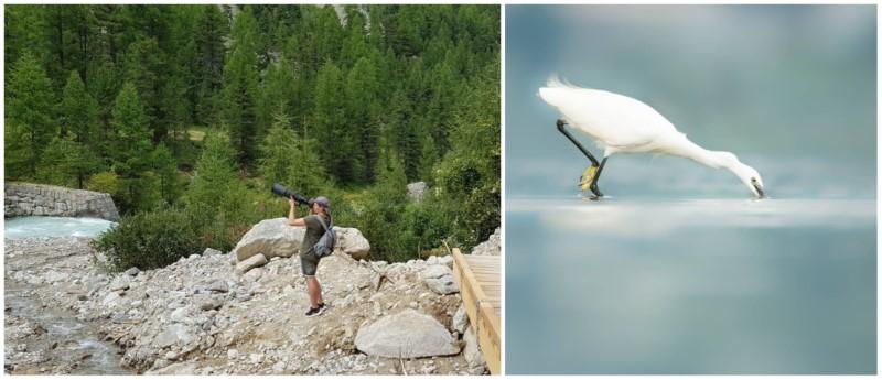 Tobias bird photography