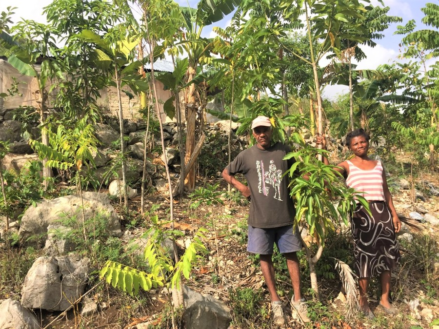 haiti tree project update 2019