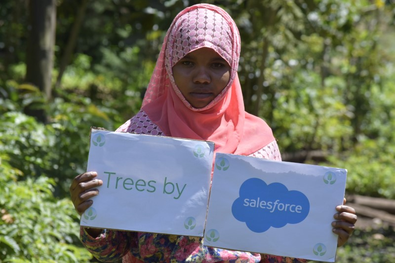 trees by salesforce 2020